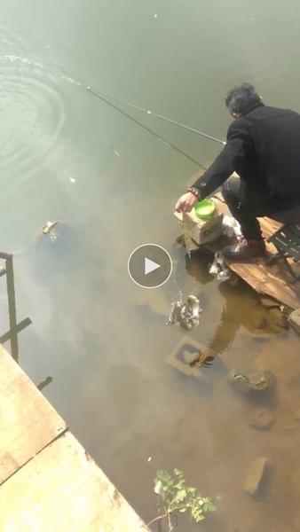 芬威克鹰钓鱼竿质量好吗怎么样多少钱,芬威克鹰鱼竿使用测评